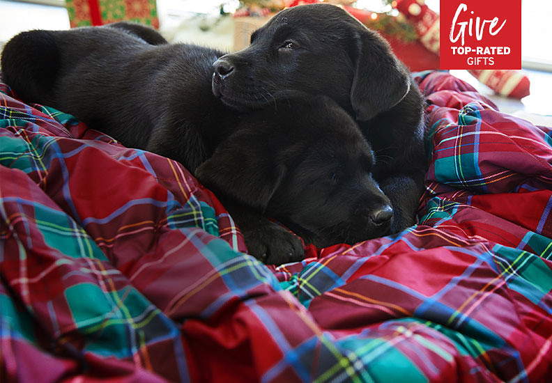 Two black lab puppies napping on a down throw