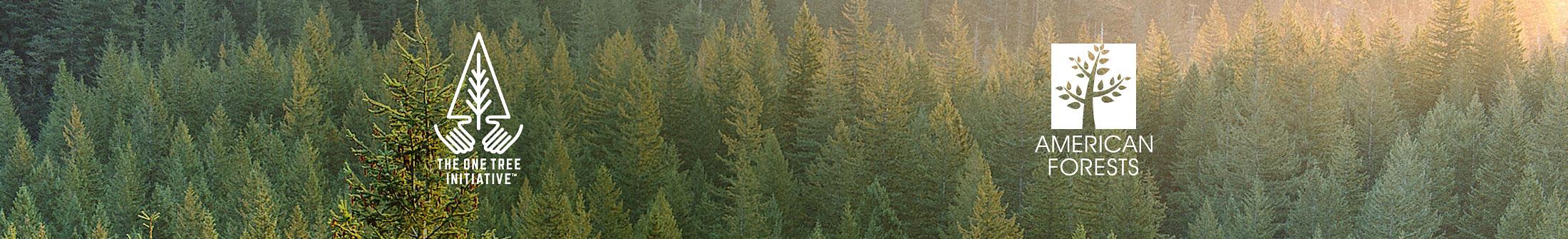 Sunlight shining on Evergreen trees